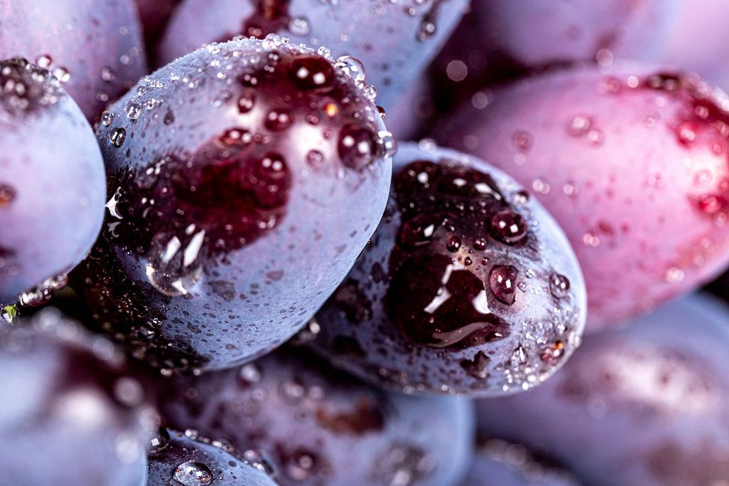 Close-up, water droplets on blue grapes