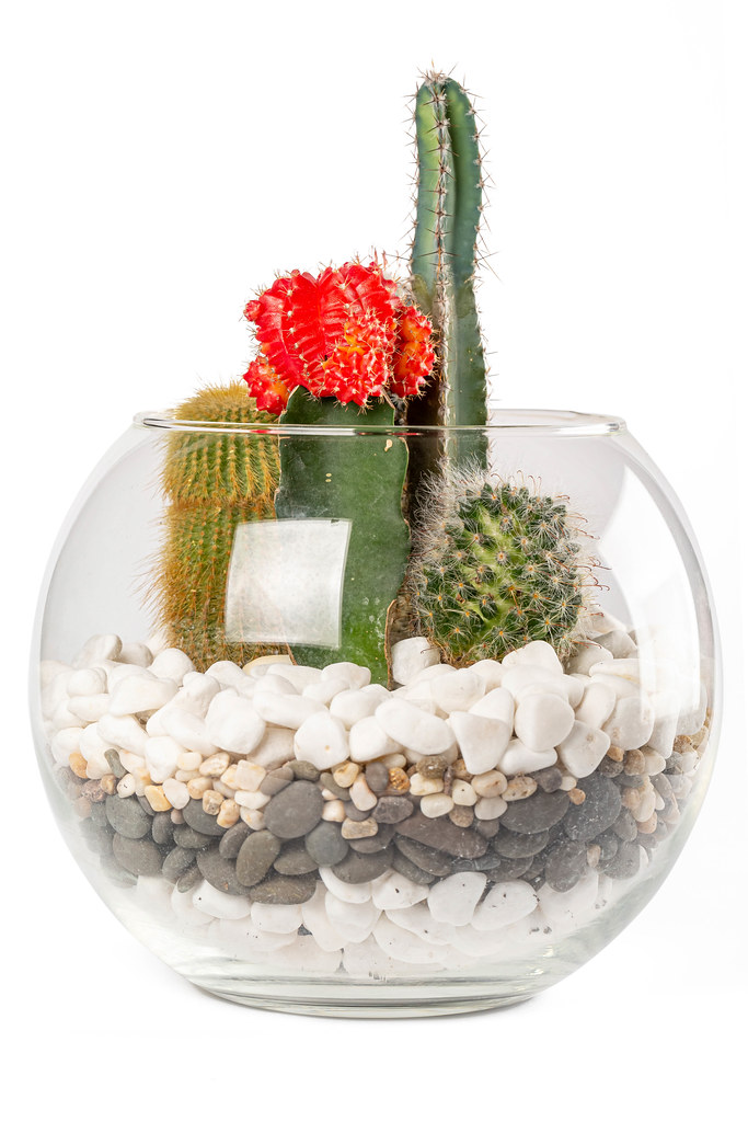 Composition of different types of cacti in a glass aquarium with stones