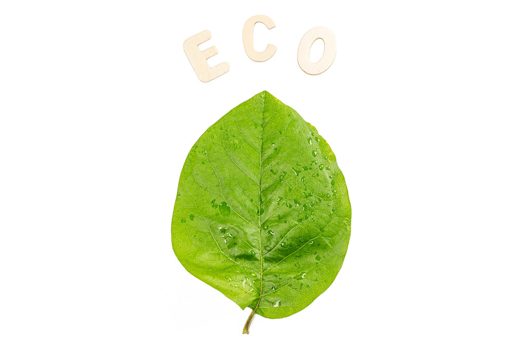 Conceptual background with green leaf and the word ECO