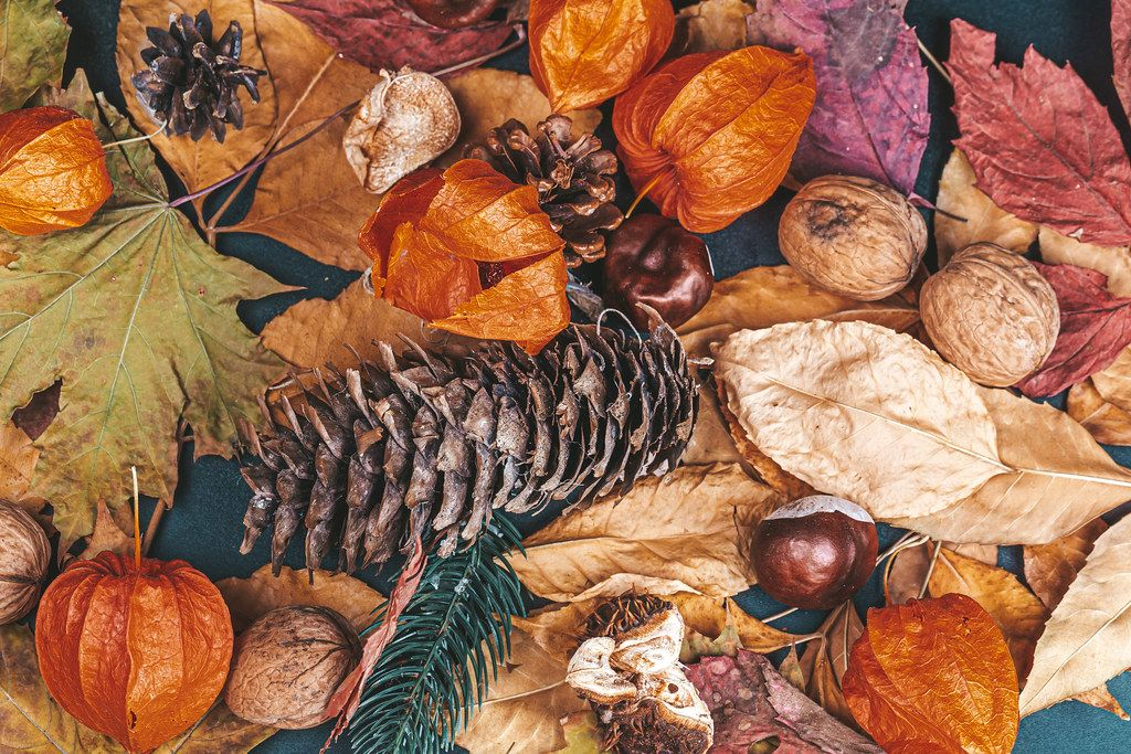 Cones, nuts, chestnuts, physalis and autumn leaves on a dark background