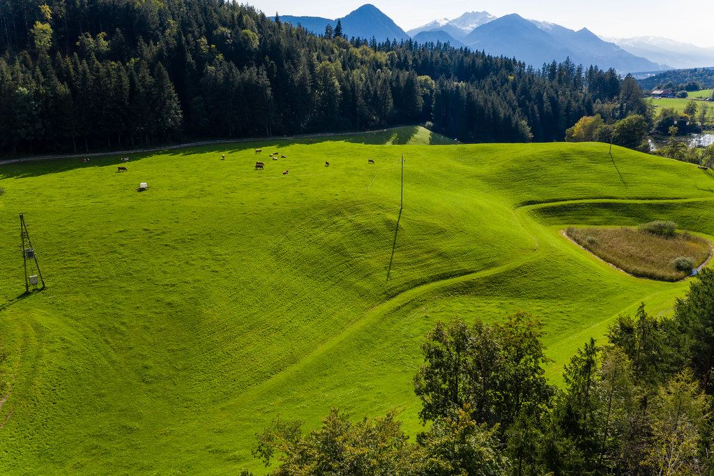 Cows grazing on a green hill near Reintal Lake in Tyrol, Austria. Drone shot in the Alps