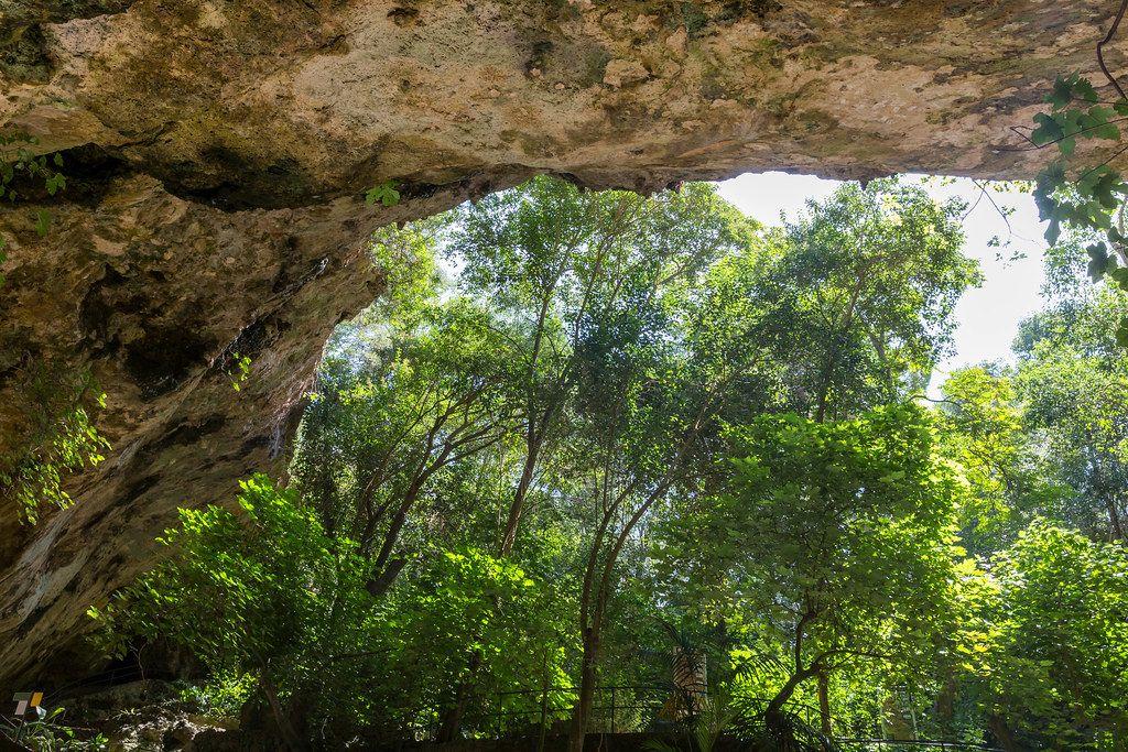 Dach einer Höhle mit Bäumen im Hintergrund. Die runde Höhle, Cuevas del Hams auf Mallorca