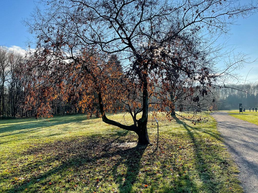 Das Licht und die Natur am Friedenwald im Dezember: ein Baum, der seine Blätter abwirft