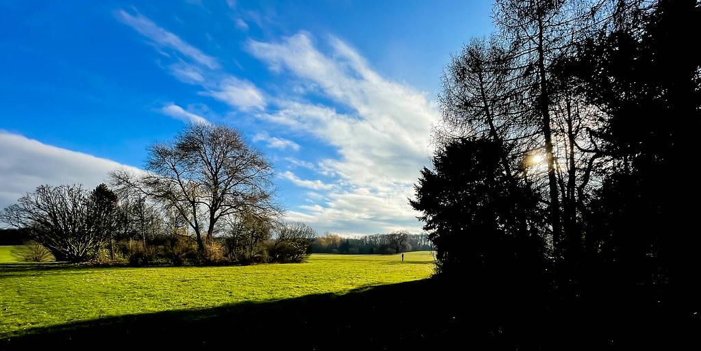 Ein sonniger Tag am Friedenwald in Köln. Park mit grüner Wiese und Bäumen mit kahlen Ästen
