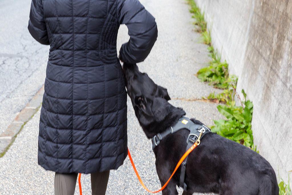 Frau mit schwarzem Daunenmantel geht mit ihrem schwarzen Hund am Straßenrand spazieren