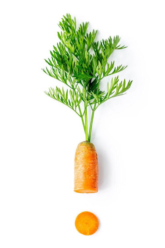 Fresh carrots with green leaves with one round piece on white