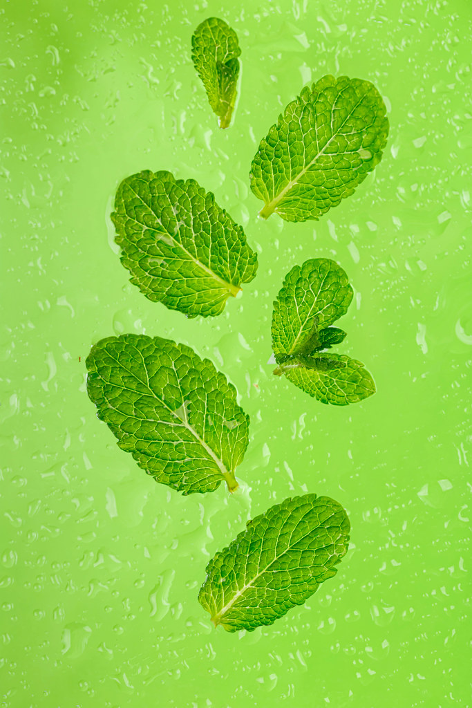 Fresh mint leaves on a wet green background