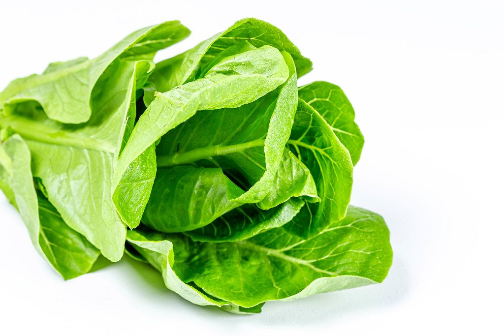 Fresh romaine lettuce on white