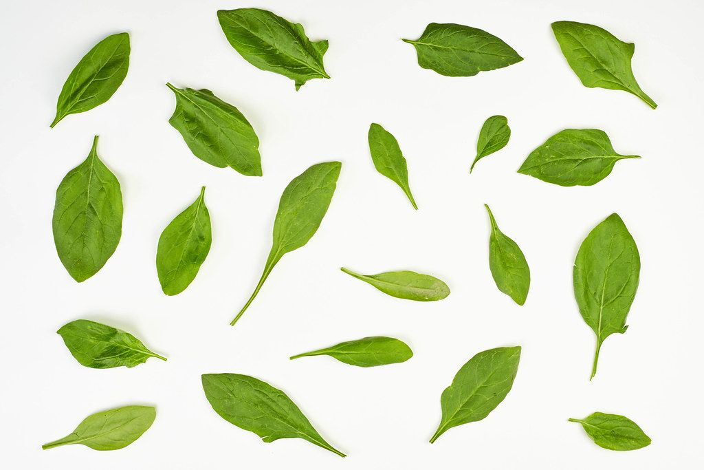 Fresh spinach leaves on white