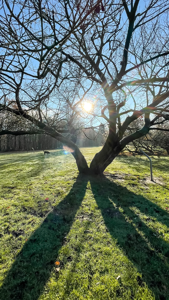Friedenswald in Cologne, Germany. Winter sun forms long shadows of a tree with bare branches