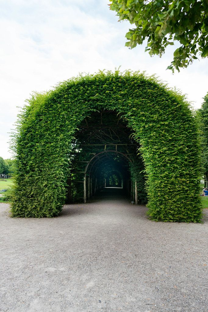 Green arch entrance to the passage made of greenery