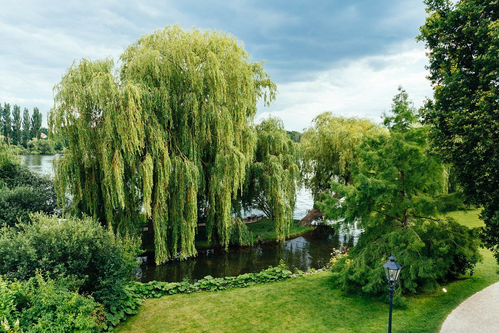 Greenery with willow trees overlooking the lake near Schwerin castle