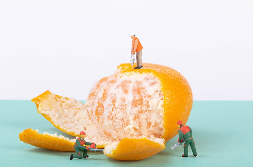 Group of workers opening tangerine