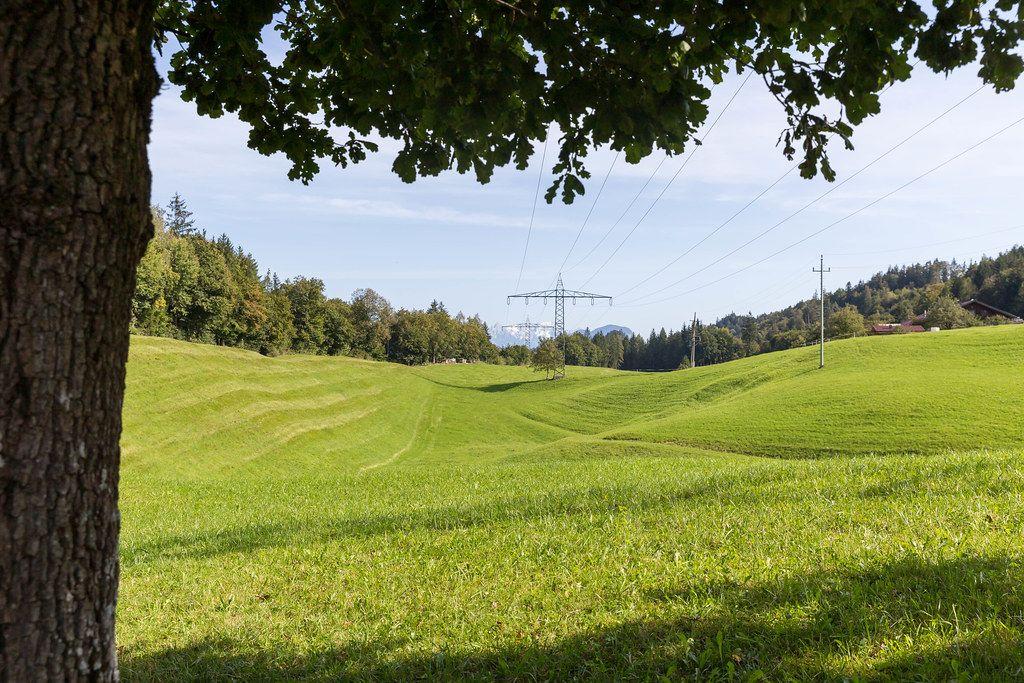 Grünes Feld mit Strommasten und Bäumen in Tirol (Österreich)