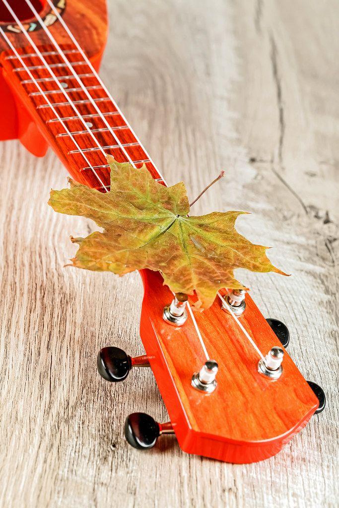 Guitar ukulele on wooden background with autumn maple leaf