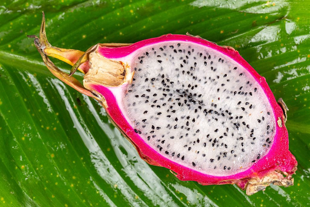 Half ripe dragon fruit on green wet leaf