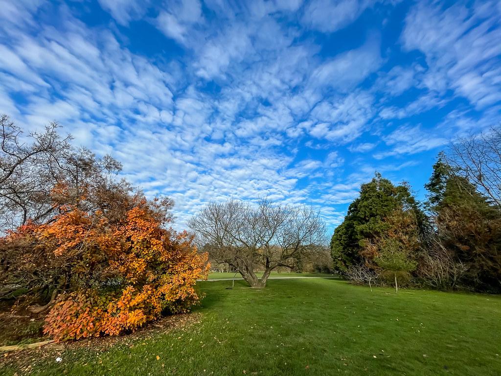 Herbstliche Farben im Park: grüne Wiese, blaue Himmel mit Schäfchenwolken, Baum mit gelben Blättern