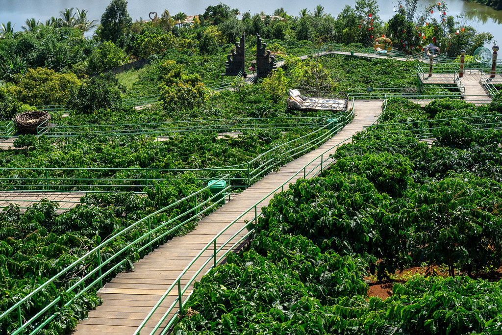 Holzweg durch eine Kaffeeplantage mit Foto-Stellen am Me Linh Coffee Garden in Dalat, Vietnam
