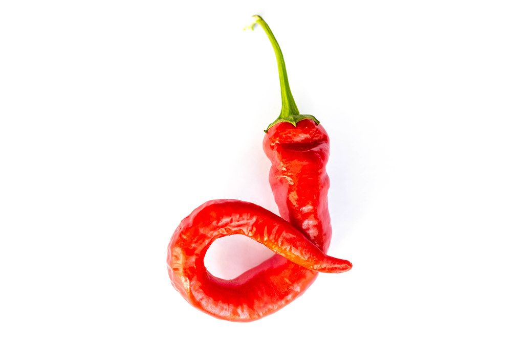 Hot red chili pepper on a white background