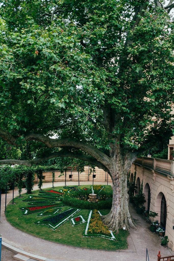 Inner garden of Schwerin with rose garden below the huge green tree