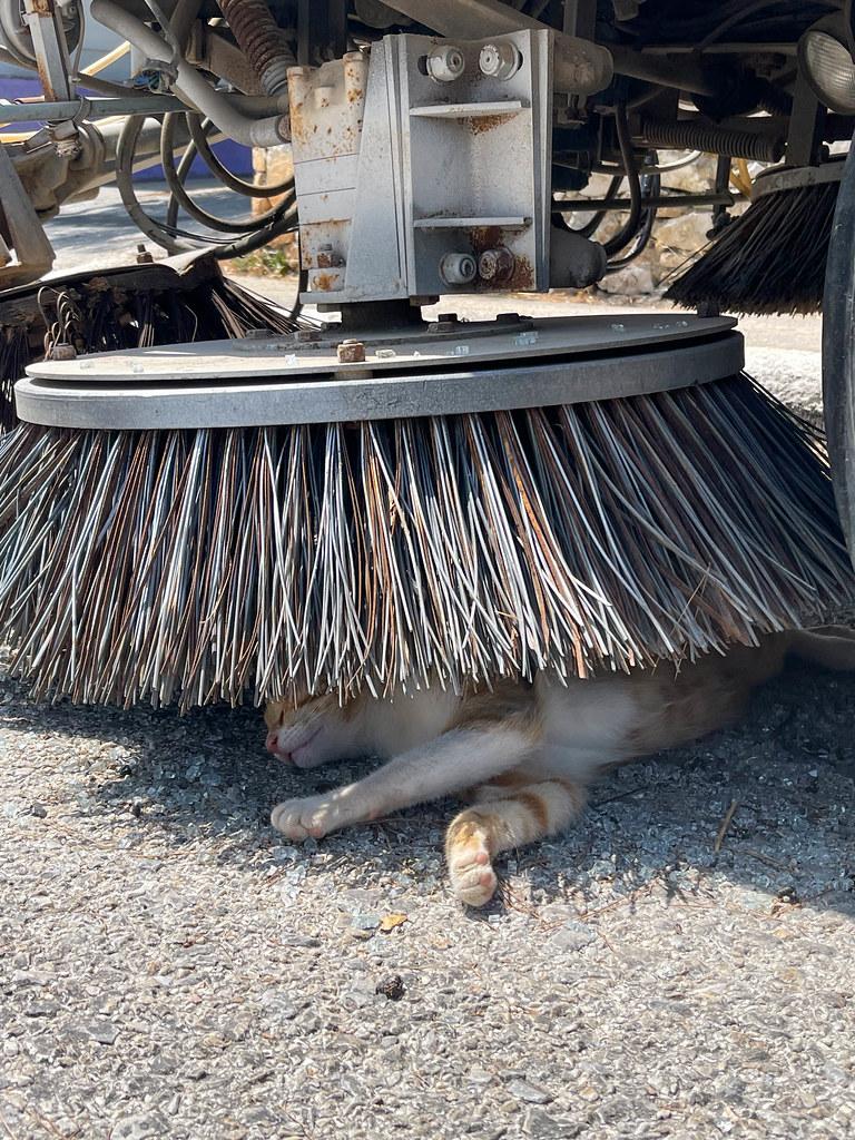 Katze macht eine Siesta im Schatten unter den Bürsten einer Straßenreinigungsmaschine auf Alonissos