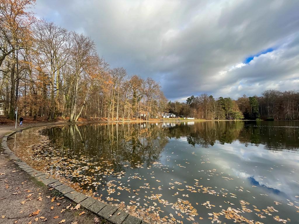 Laub liegt im Wasser am Adenauer Weiher in der Nähe vom Friedenswald in Köln
