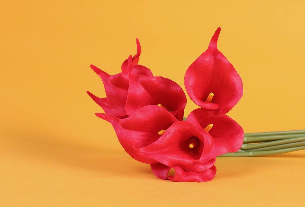 Lily roses on orange background