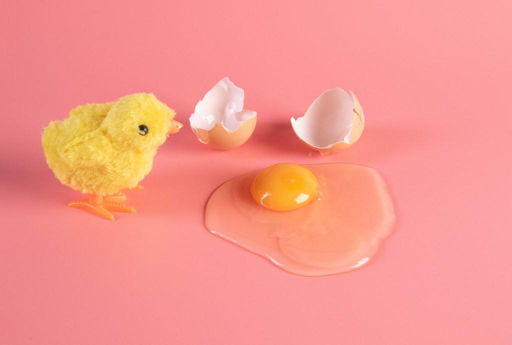 Little chicken with broken brown chicken egg