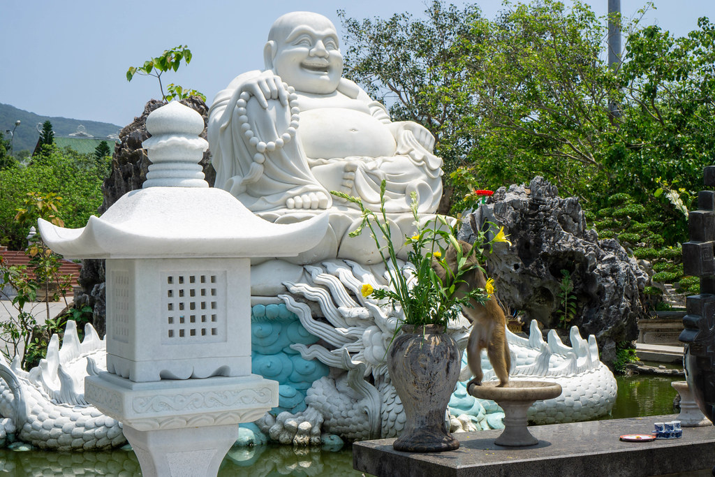 Macaque Monkey picking and eating Yellow Flowers in front of a Laughing Buddha Statue at Linh Ung Pagoda in Da Nang, Vietnam