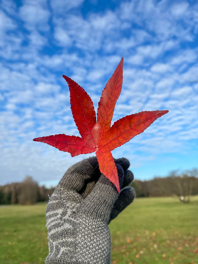 Mackerel blue sky, five-pointed red leaf, grey woolen glove: outdoor colours in winter