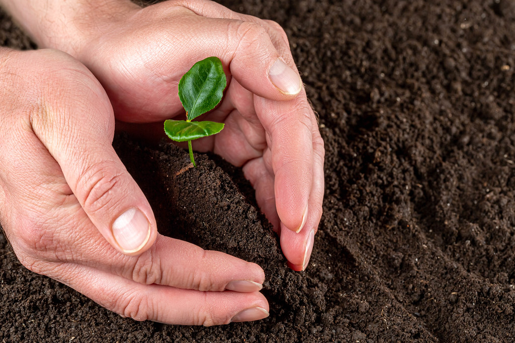 Man hands protect small tree growing on fertile soil, care of nature and earth day concept