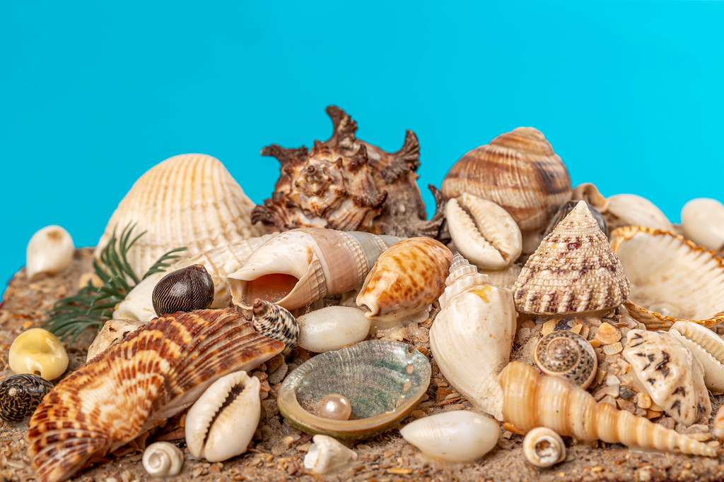 Many different sea shells, behind a blue background