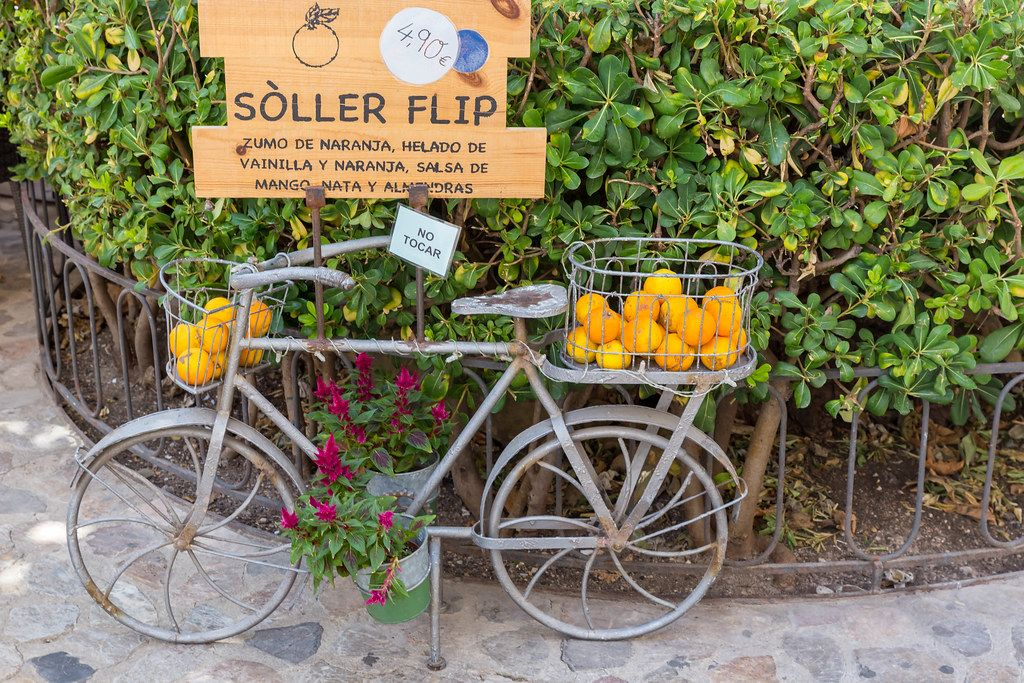 """Metal bicycle with flowers in pots and oranges in baskets. Orange juice and ice """"Sóller Flip"""""""