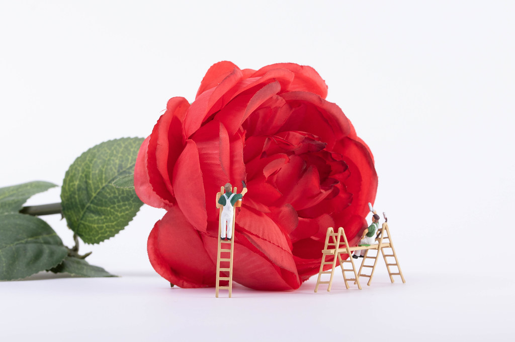 Miniature painters with red rose