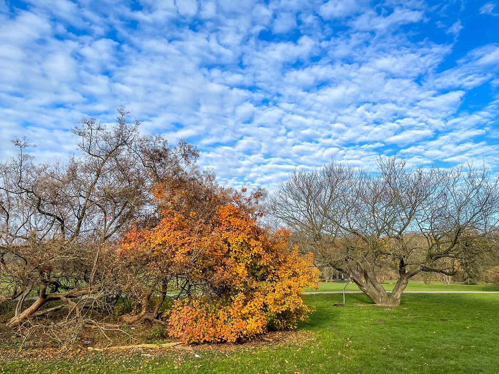 Natur am Ende des Herbstes: Bäume mit nackten Zweigen und teilweise noch mit gelben Blättern