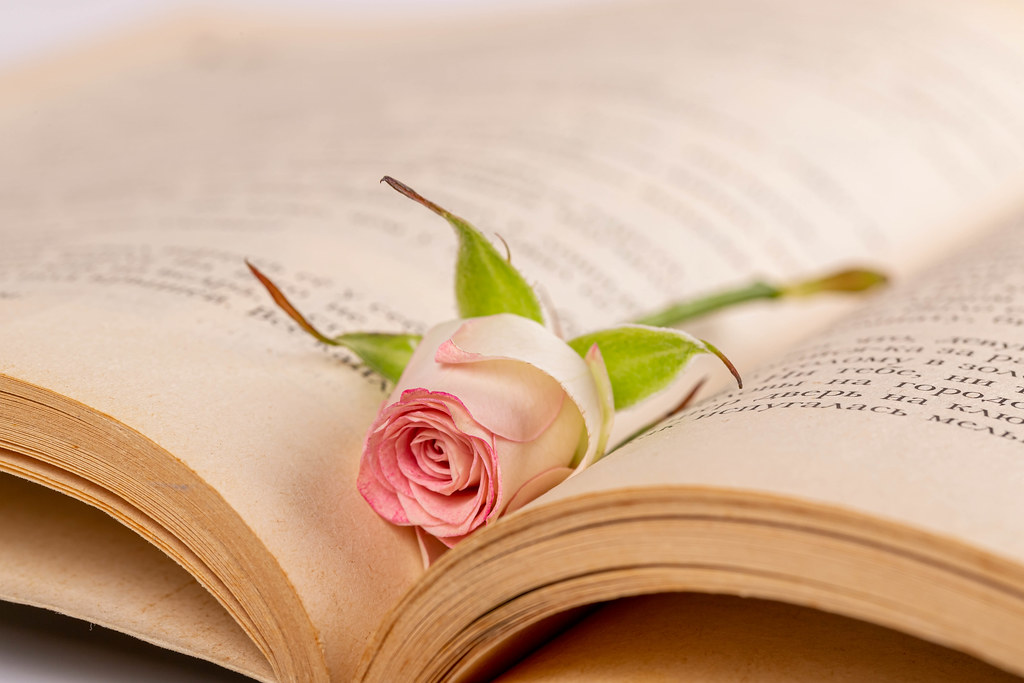 One small rose lies in an open book