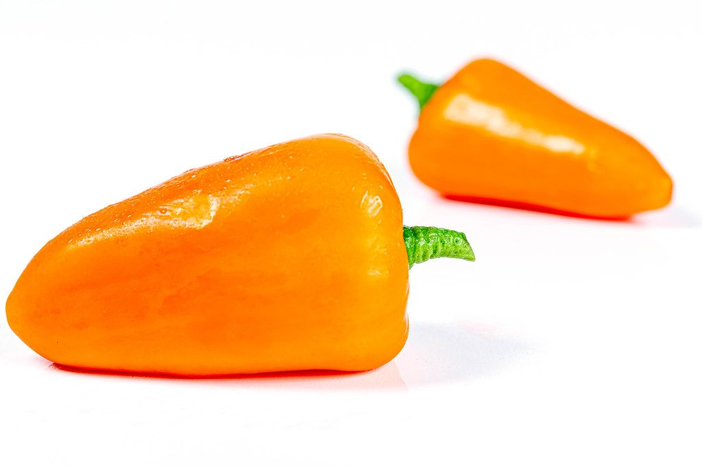 Orange bell pepper on a white background