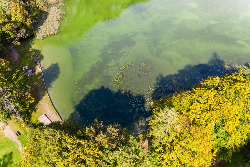Overhead drone shot of green lake waters and trees with yellow leaves: autumn view at lake Reintal, Tyrol