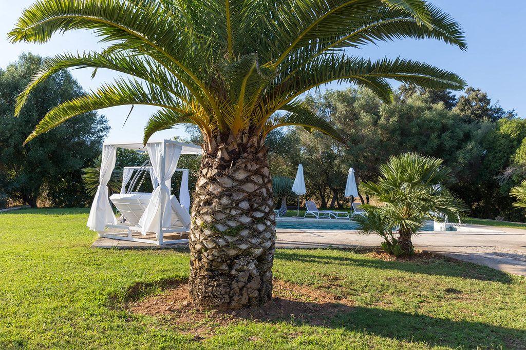 Palmen bei einem Pool mit weißen Sonnenschirmen, Sonnenliegen und Pavillons. Sommer auf Mallorca