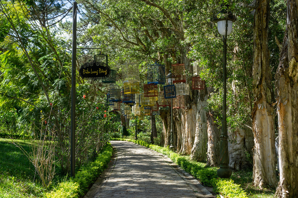 Park Walkway along Trees with Street Lanterns and Bird Cages in the Park in front of Bao Dai King