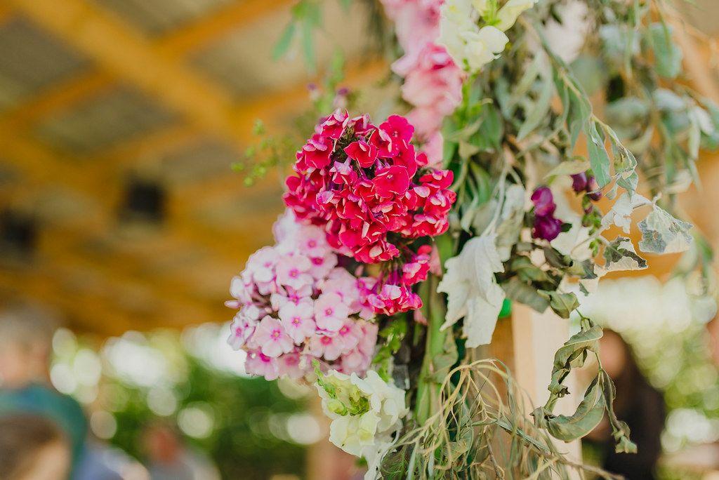 Phlox CloseUp Garden Prty Decor