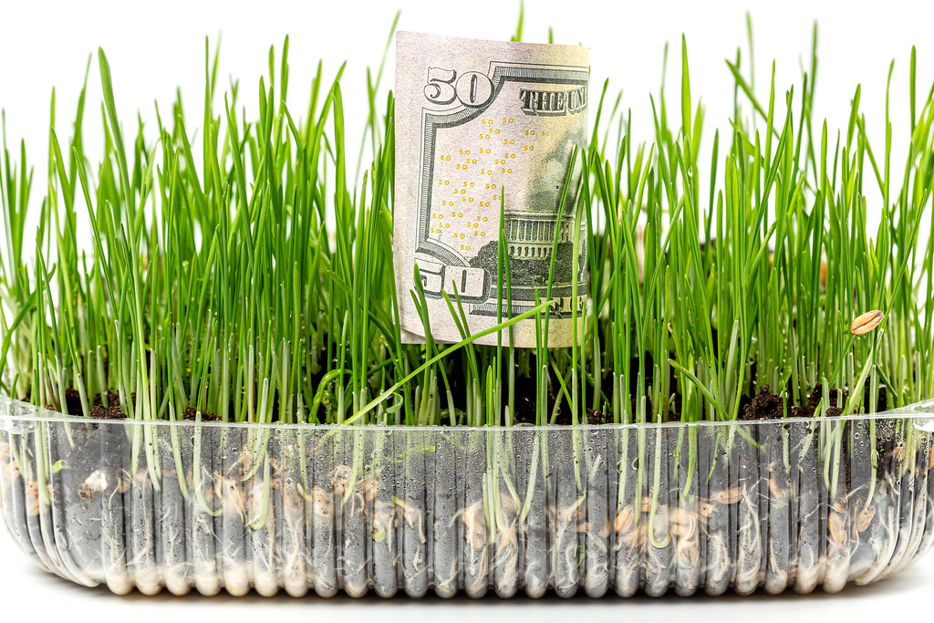 Profit growth concept - dollar bill and young wheat sprouts