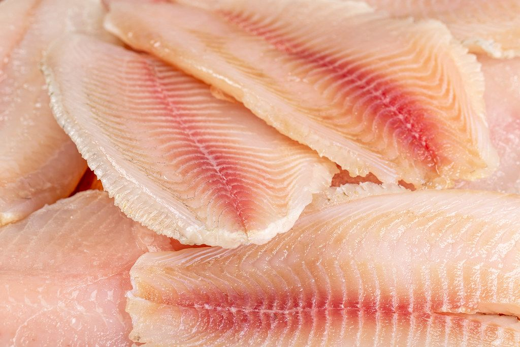 Raw frozen tilapia fillet background