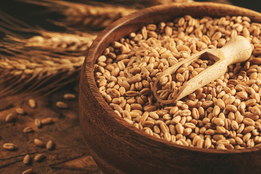 Raw wheat grains in a wooden bowl and in a scoop, close-up