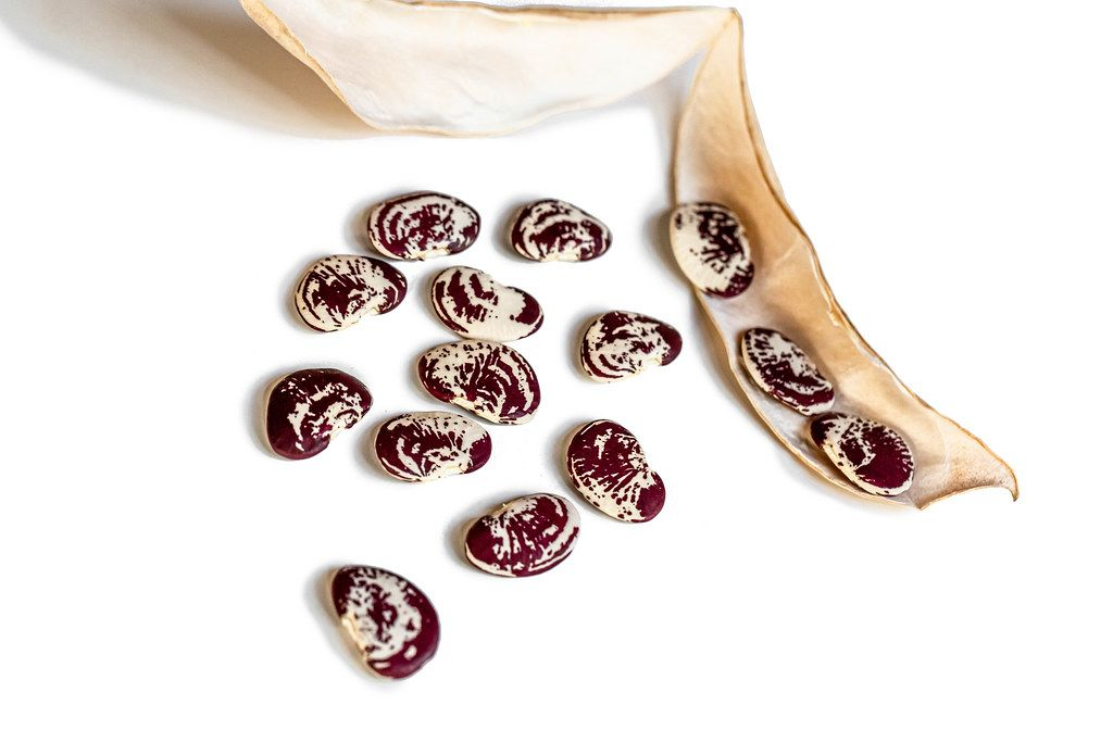 Red and white beans with pod on white background