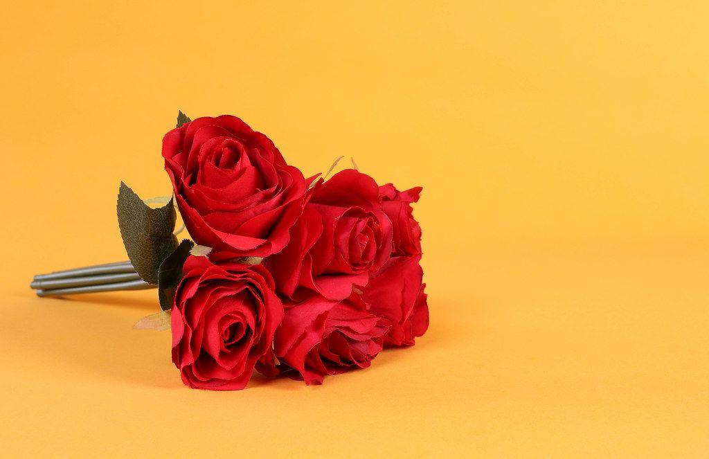 Red rose flowers on orange background