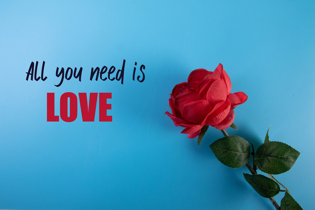Red rose with All you need is love text on blue background