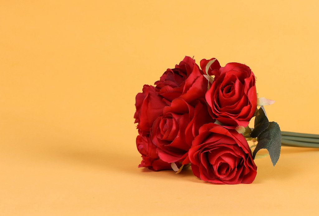 Red roses on orange background