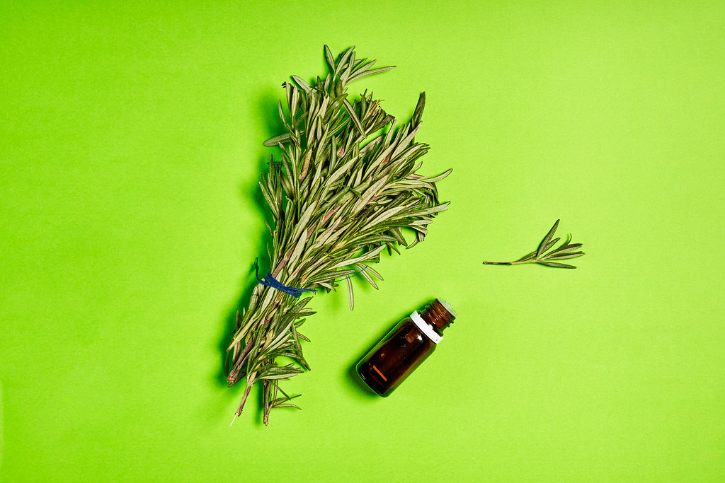 Rosemary essential oil in small glass bottle and branches of plant fresh rosemary