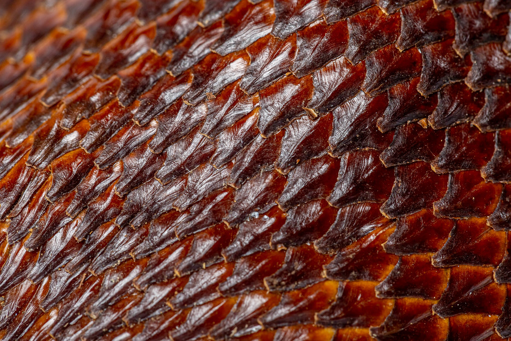 Scaly brown skinned snake fruits background, texture salak fruit close-up